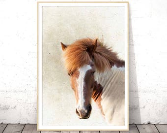 Horse Print, Horse Wall Art, Horse Photography, Horse Photo, Equestrian Decor, Icelandic Horse, Equine Art, Cottage Wall Art, Large Wall Art