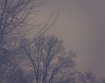 December Fog Color Photo Print { brown, tree, branch, winter, gloomy, cloudy, dense, wall art, macro, nature & fine art photography }