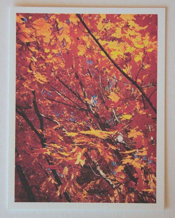 Fall Leaves, Orange Crush, note card, blank greeting card, trees, woodland, gold, rust, red, fine art, single card, photo greeting cards,