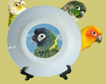 "Yellow-collared Macaw Parrot Blue Sky Clouds White Decorative Ceramic 8"" Plate and Display Stand"