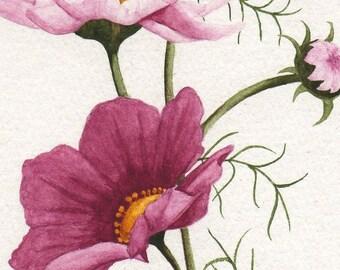 Pink Cosmos Print