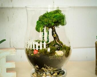 Terrarium kits, miniature garden, moss Terrarium, living moss terrarium, fairy garden kit,Fairy garden accessories, Fairy tree house,fairies
