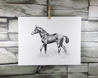 Foal - horse art print of original graphite pencil horse drawing