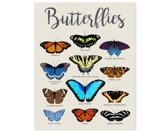 Butterfly Wall Art Butterfly Art Butterfly Print Butterfly Poster Butterfly Decor Educational Posters for Kids Poster for Kids Room Decor