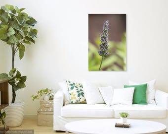 Portrait of Lavender - Nature photography print - lavender wall art- Lavender print - bokeh nature photo - lavender photography