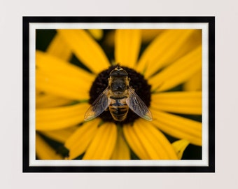 Bee Happy! Bee on Sunflower, Pollination, Print, Wall Art, Home Decor