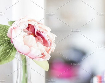 Styled Stock Photo   Single Flower In Vase   Blog stock photo, stock image, stock photography, blog photography