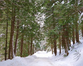 Snow Covered Mountain Road Lined by Tall Snowy Evergreen Trees in the Cascades of Washington State Winter Scene Landscape Seasons Beautiful