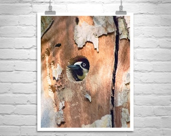 Bird Print, Woodpecker Bird Photography, Woodpecker Art, Woodpecker Photo, Gift for Bird Watcher, Birder Gift, Forest Birds, Nesting Birds