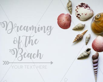 Styled Stock Photgraphy | Seashells on White Background | Graphic Design Background | Instant Download