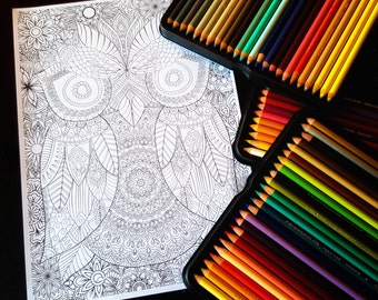 Owl Detailed Colouring Page