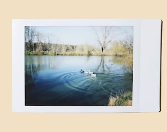 Ducks on a Pond - Instant Film Fine Art Photo