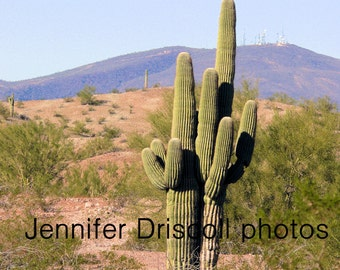 5X7 Print - Kiss and Make Up (Arizona, Saguaro, big-arm, cactus)