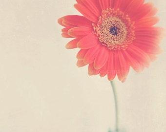 daisy photograph, flower photography, coral melon pink orange nursery wall art, still life photo, nature, spring, baby girl print