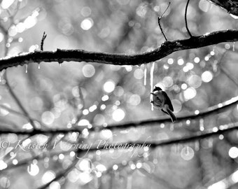 Bird Pictures, Pictures of Birds, Winter Pictures, Ice, Birds, Nature, Bokeh, Hanging by an Icicle
