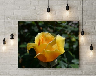 Yellow Rose of Texas Print, Flower Photography, Rose Wall Art, Flower Print, Flower Photos, Metal Prints, Rose Print, Floral Photography