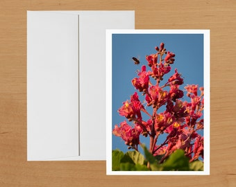 Bee visiting flower blossoms photo greeting card