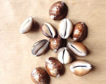 Brown, 2 holes, 26 mm cowrie shells