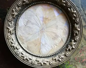 Beautiful Vintage decorative mother of Pearl butterfly wings and brass