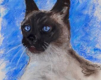 Seal Point Siamese Cat Art Original Pastel Drawing By Cori Solomon