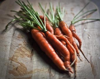 Carrot Photography garden art harvest crop orange green vegetable summer rustic kitchen art foodie - From our garden - fine art
