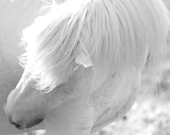 Wild White Horse Photo - White Horse Mane, Digital Photography, Horse Photography, Horse Art, Wild Horse, Neutral Horse Art, Horse Decor