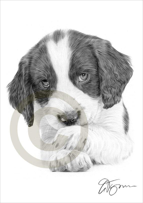 Chien chiot Springer Spaniel dessin au crayon impression