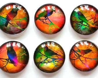 Magnets - Bright Birds - Spring - Necklace Cabochon Supplies - Free U.S. Shipping - Set of 6 - 1 Inch Domed Glass Circles