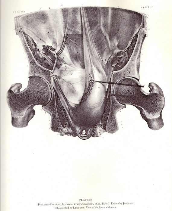 Human Anatomy Lower Abdomen By Philippe Frdric Blandin Or Side
