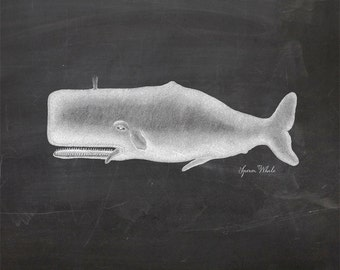 Vintage Sperm Whale Print 8x10 P124