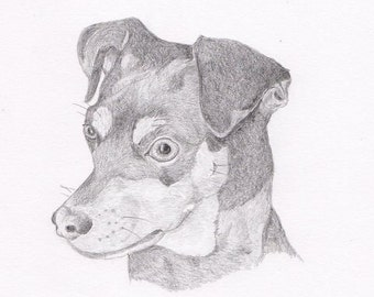 Miniature Pinscher - Min Pin Signed Personalized Original Pencil Drawing Double Matted Print -Free Shipping- Desert Impressions