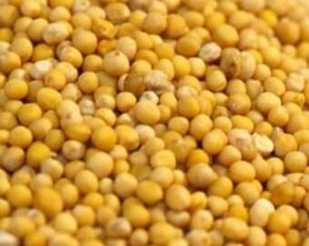 Yellow Mustard Seed - Certified Organic