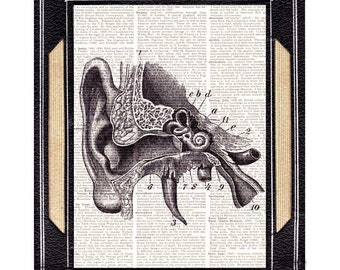 ANATOMICAL EAR Art print Wall decor human anatomy medical science doctor upcycled vintage dictionary book page black white 8x10, 5x7, 4x6
