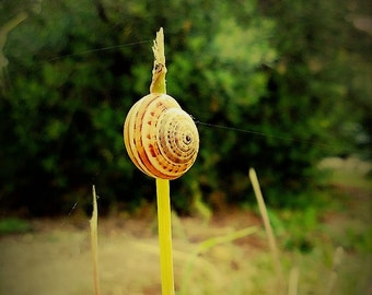 The Snail's Pace