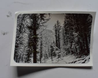 Winter forest II sticker