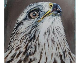 Cooper's Hawk Print Art Fine Art Print Animal Spirit Guide