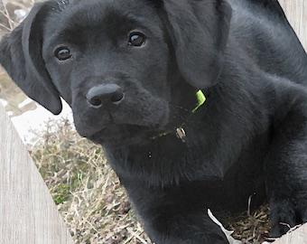 Black Lab Blanket 06AWS - Labrador Blanket - Duck Dog - Labrador Decor - Hunting Dog - Sherpa Dog Blanket - Black Lab Gifts - Black Lab Art