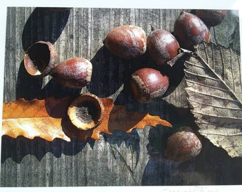 The Flora Collection: Abstract Acorns with Leaves by SusanARay of OneHealingStone Studio
