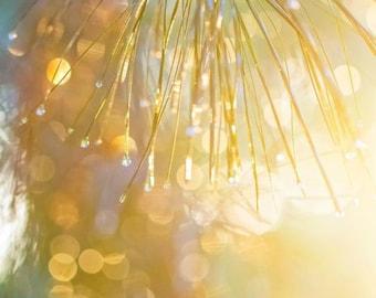 Sunlit Pine Branch Drops Canvas Print - 24x30 -Large Canvas Print - Fine Art Photography - Wall Art - Golden Sun - Turquiose - Inspirational