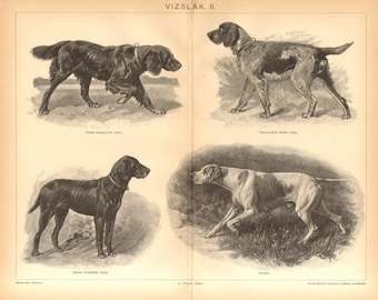1895 Dog Breeds, Hunting Dogs, German Longhaired, Shorthaired and Wirehaired Pointer, English Pointer Original Antique Engraving to Frame