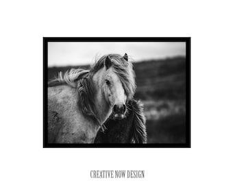Horse Photography, Animal Photography Prints, Horse Poster, Horse Photography Prints, Horses Prints, Horses Photography Prints, Animal print