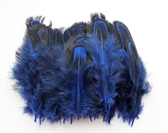set of 25 feathers blue
