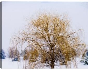 Weeping Willow In Winter - Indoor Art or Outdoor Art