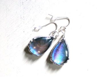 Blue Butterfly Wing Tear Drop Domed Earrings, Blue Morpho Butterfly