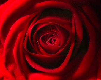 Red Rose Art Photograph, Square Flower Photograph, Nature Wall Art, Macro Photography, Fine Art Photography, Home Decor, Flower Art