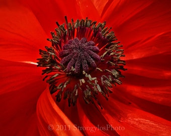 greeting card red poppy flower romantic 5x7 eco friendly ready to ship under 5 dollars