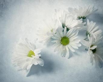 Daisy Photograph, White Daisy Print, Floral Print, White Flower Photo, Daisy Still Life, Floral Bedroom Decor, White Cottage Decor