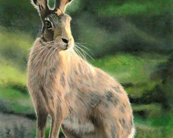 Hare raising day
