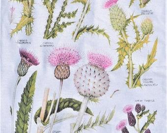 Botanical tea towel – Thistle