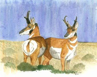 Artwork Water Color Giclee Print, Pronghorn Antelope Titled-Prairie Eyes